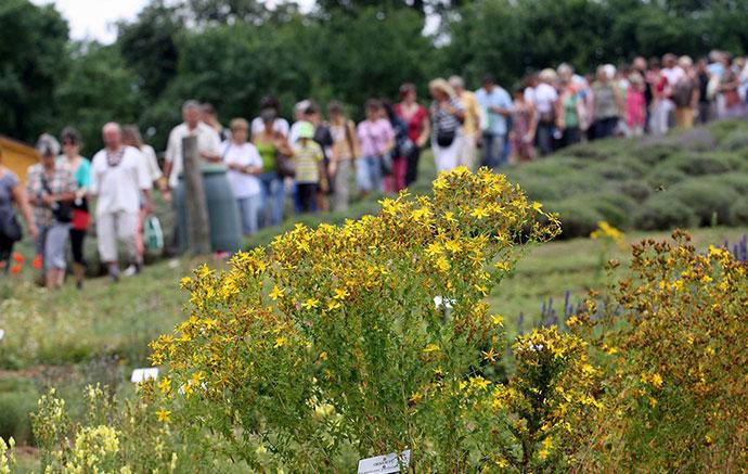 Visszaemlékezés a nyári gyógynövénytúrákra