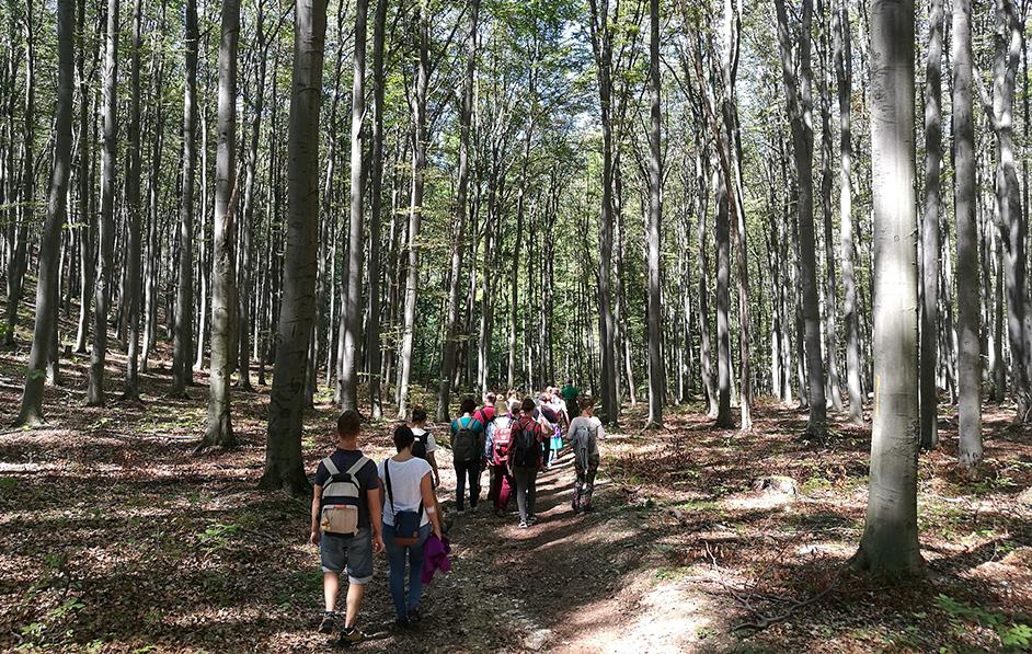 Gyönyörű erdőben sétálnak a túrázók