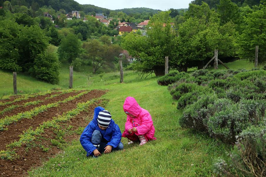 Gyerekek játszanak a gyógynövénykertben