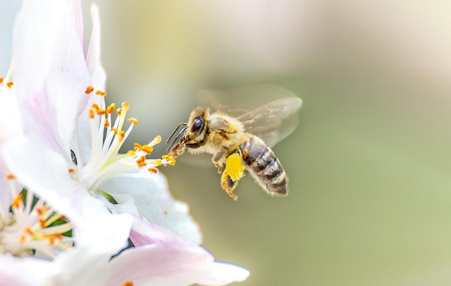 A világ megmentői, a méhek