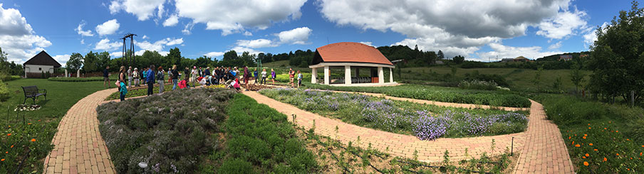 Gyógynövénykert napsütésben a túrázókkal