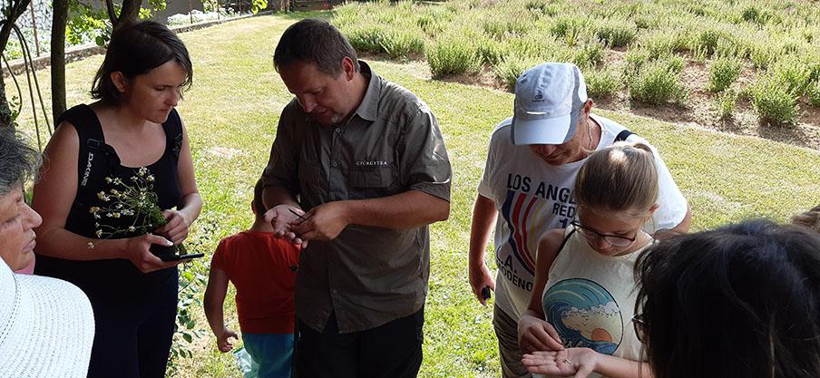 Lakatos Márk a kezében mutatja a gyógynövényt
