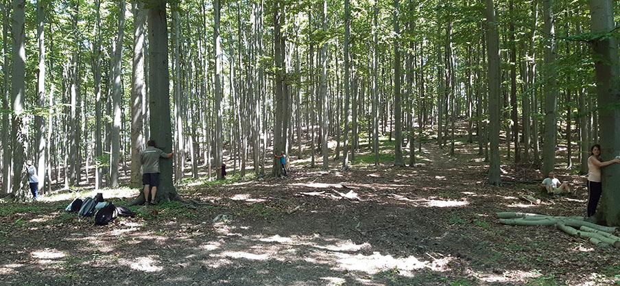 Az erdő békéje