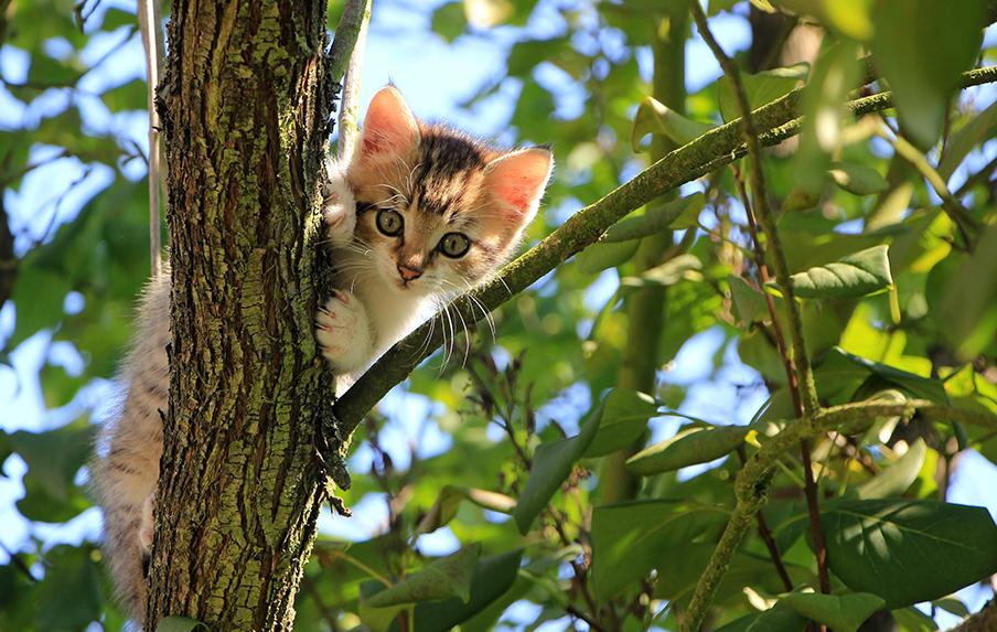 Macskagyökér és macskamenta